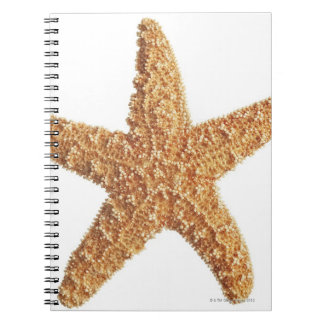 Starfish isolated on white notebook