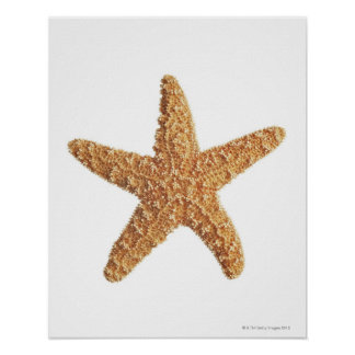 Starfish isolated on white poster