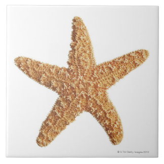 Starfish isolated on white tile