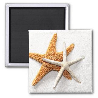 Starfish Magnet