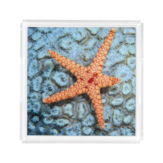 Starfish On A Coral With Polips