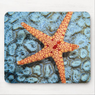 Starfish On A Coral With Polips Mouse Mat