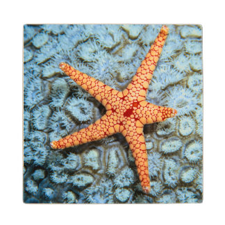 Starfish On A Coral With Polips Wood Coaster