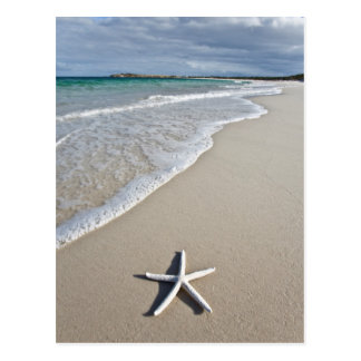 Starfish On A Remote Beach Postcard