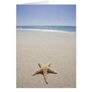 Starfish on beach by Atlantic Ocean Greeting Card