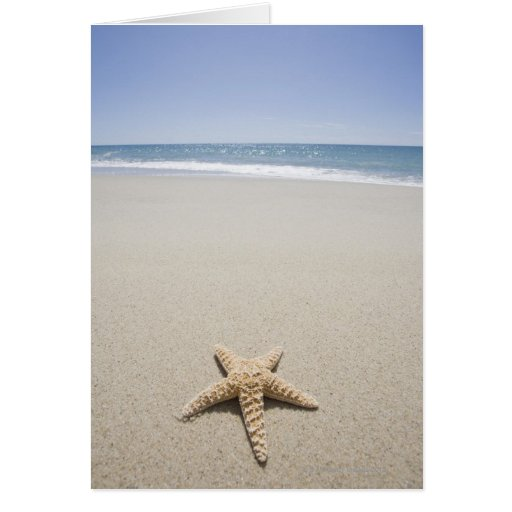 Starfish on beach by Atlantic Ocean Greeting Card