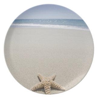Starfish on beach by Atlantic Ocean Plate
