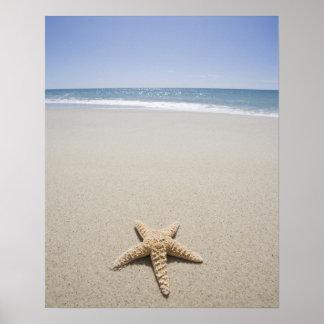 Starfish on beach by Atlantic Ocean Poster