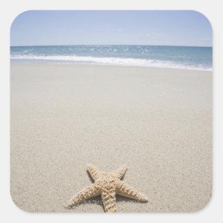Starfish on beach by Atlantic Ocean Square Sticker