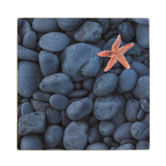 Starfish On Black Rocks Along The Coast | Iceland Wood Coaster