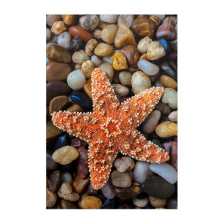 Starfish On Rocks Acrylic Wall Art