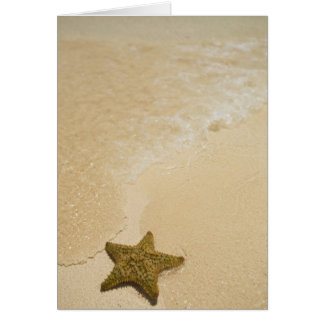 Starfish on sandy beach, Gibbs Cay Land and Card
