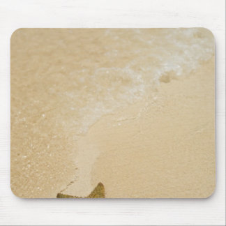 Starfish on sandy beach, Gibbs Cay Land and Mouse Pad