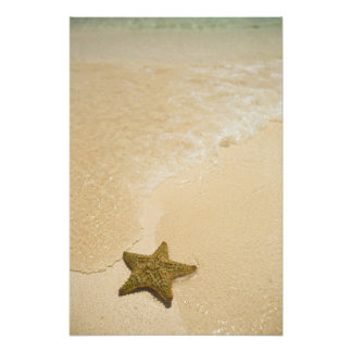 Starfish on sandy beach, Gibbs Cay Land and Photographic Print
