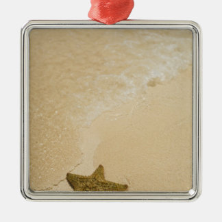 Starfish on sandy beach, Gibbs Cay Land and Silver-Colored Square Decoration