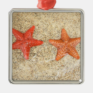 starfish on the beach, at the edge of the ocean christmas ornament