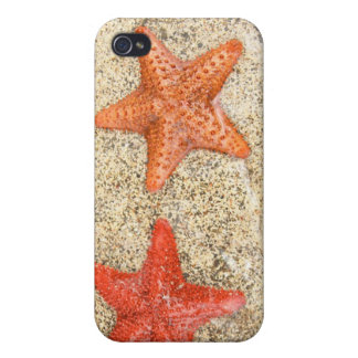 starfish on the beach, at the edge of the ocean iPhone 4/4S cases