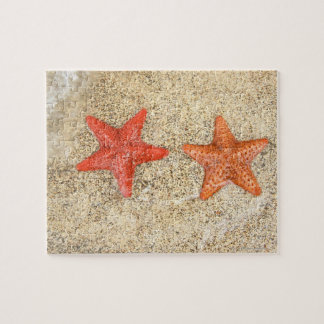 starfish on the beach, at the edge of the ocean puzzles