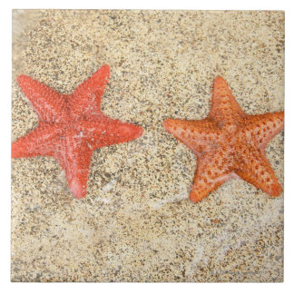 starfish on the beach, at the edge of the ocean tile