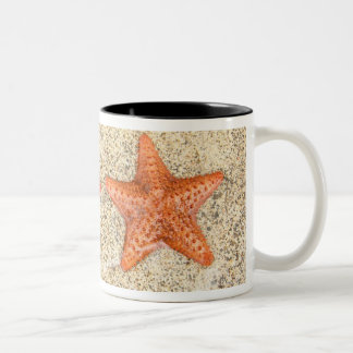 starfish on the beach, at the edge of the ocean Two-Tone coffee mug
