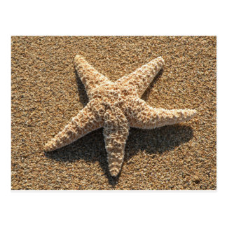 Starfish on the beach postcard