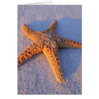 Starfish On White Sand Card