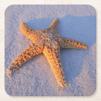 how to write a good essay on starfish learning about starfish unit study on sea creatures