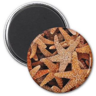 Starfish Photograph 6 Cm Round Magnet