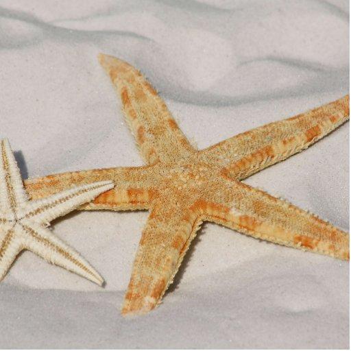 Starfish Photo Sculptures