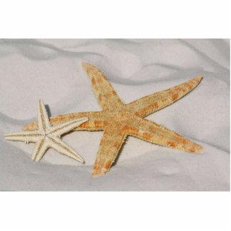 Starfish Standing Photo Sculpture