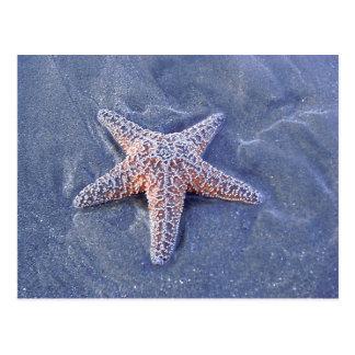 Starfish Postcard