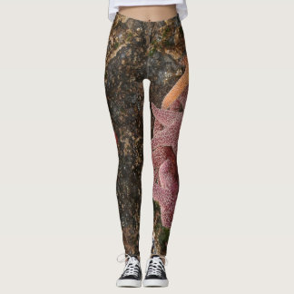 Starfish/Sea Stars in Cannon Beach, OR, Photo 5 Leggings