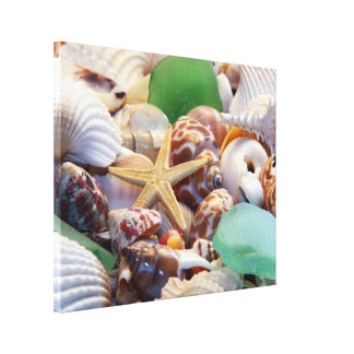 Starfish & Seashells Canvas Wrap
