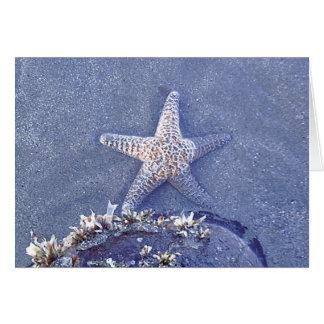 Starfish Semi Immersed Card