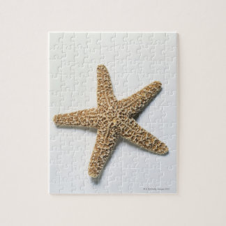 Starfish shell on white background jigsaw puzzle