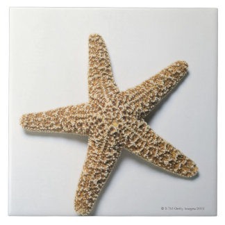 Starfish shell on white background large square tile