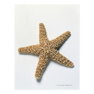 Starfish shell on white background postcard