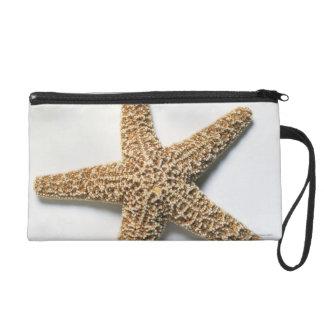 Starfish shell on white background wristlet