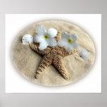 Starfish Shells Plumeria on Sand Poster