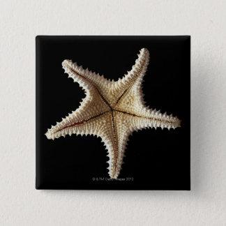Starfish skeleton, close-up 2 15 cm square badge