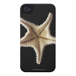 Starfish skeleton, close-up 2 iPhone 4 Case-Mate case