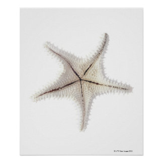 Starfish skeleton, close-up 2 poster