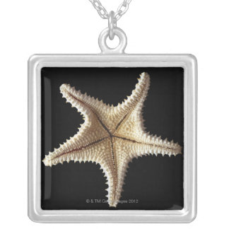 Starfish skeleton, close-up 2 silver plated necklace
