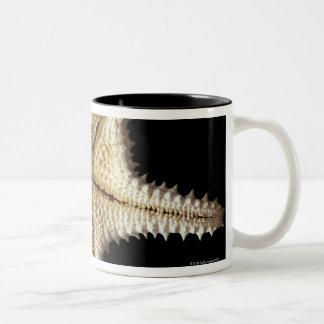 Starfish skeleton, close-up 2 Two-Tone coffee mug