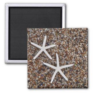Starfish skeletons on Glass Beach Magnet