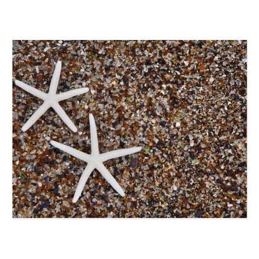 Starfish skeletons on Glass Beach Post Card