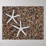 Starfish skeletons on Glass Beach Poster