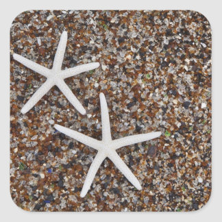 Starfish skeletons on Glass Beach Square Sticker