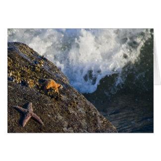 Starfish Splash Card