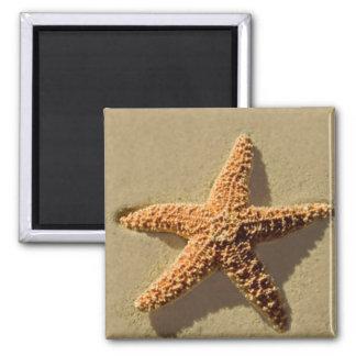 Starfish Square Magnet